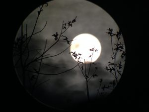 Beanblossom Bottoms Full Moon Night Hike @ Beanblossom Bottoms Nature Preserve