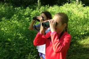 Beginners Birding Walk @ Avon Town Hall Park