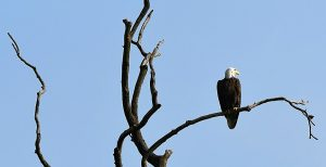 Eagles over Monroe @ Fairfax State Recreation Area